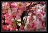 Kunstige blomster på trær i Chinatown